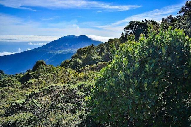 Le café au Costa Rica